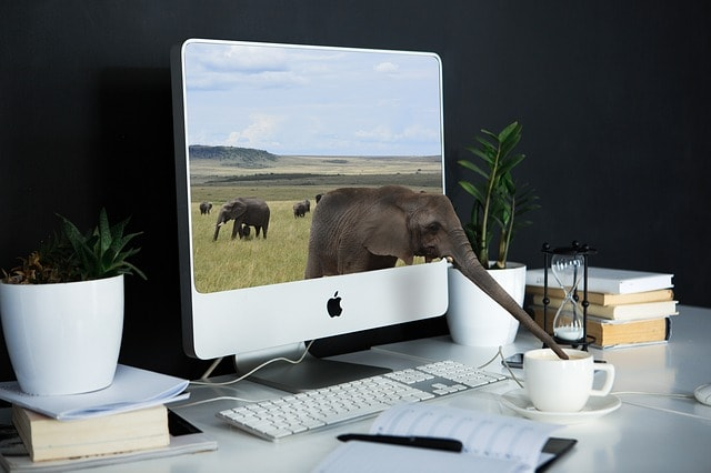 computer with elephant