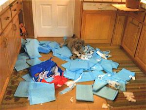 dog chews up stuff